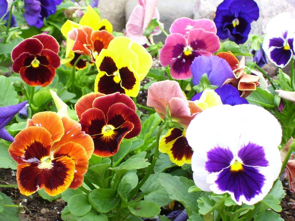 What To Plant In Fall, To Enjoy In Spring