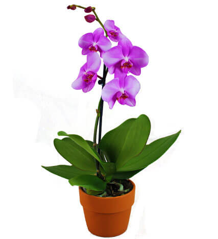 4 Unique Orchid Species