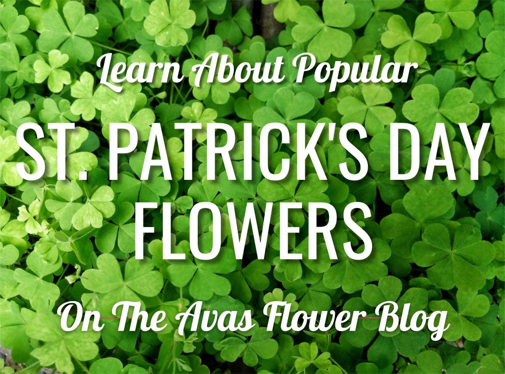 The Best Flowers For St. Patrick's Day Celebrations