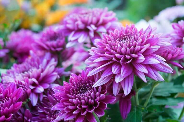 5 Flowers that Symbolize Love