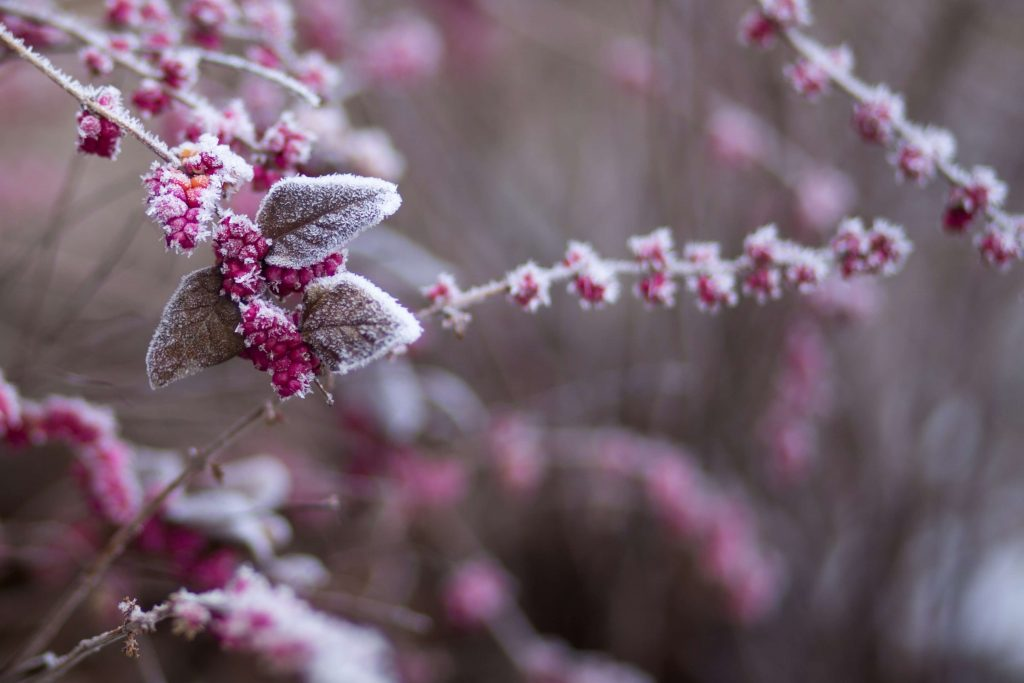 6 Tips for Taking Care of Flowers in the Winter