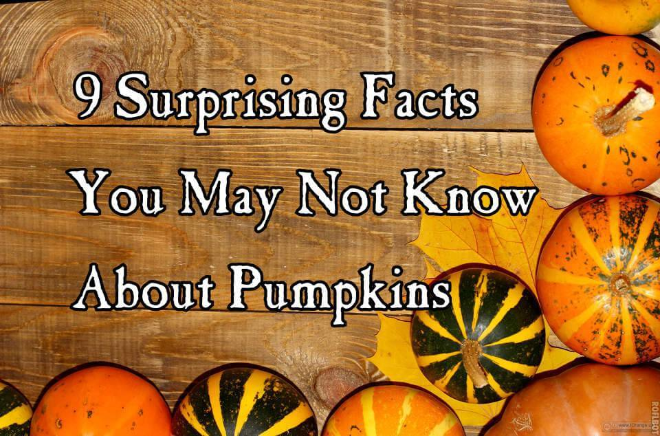 facts about pumpkins