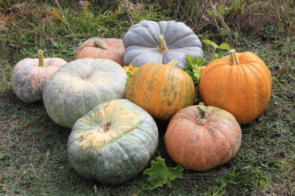 9 Surprising Facts You May Not Know About Pumpkins