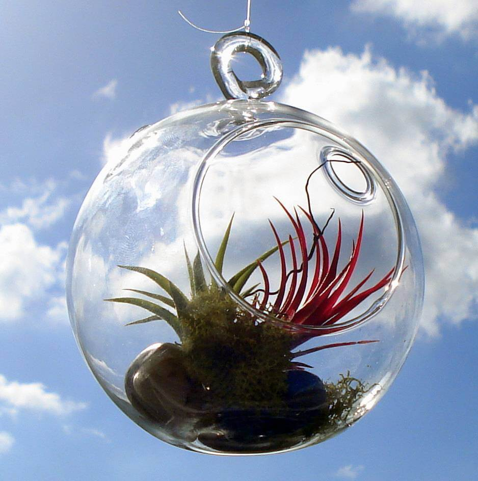 Air Plants: The Latest Trend In Houseplants