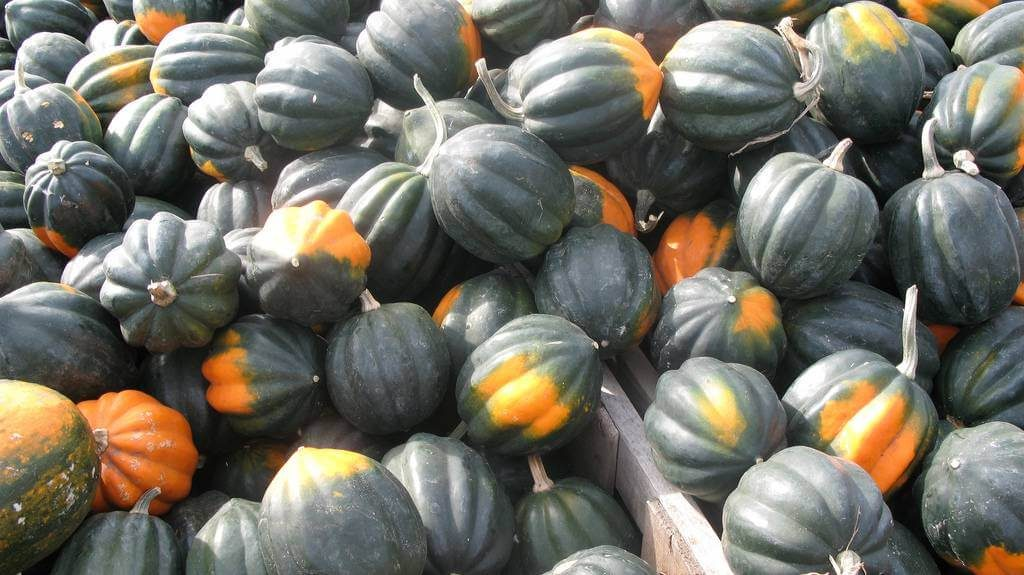 All About Squash, The Superfood Of Winter