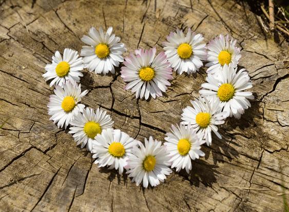 April's Birthflower: The Darling Daisy