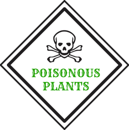 Beware These Poisonous Plants That Grow In Your Yard