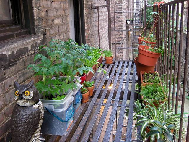 Container Gardening: Making Gardens Possible Anywhere!