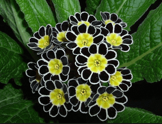 Create a Spooktacular Garden With These 13 Black Blooms