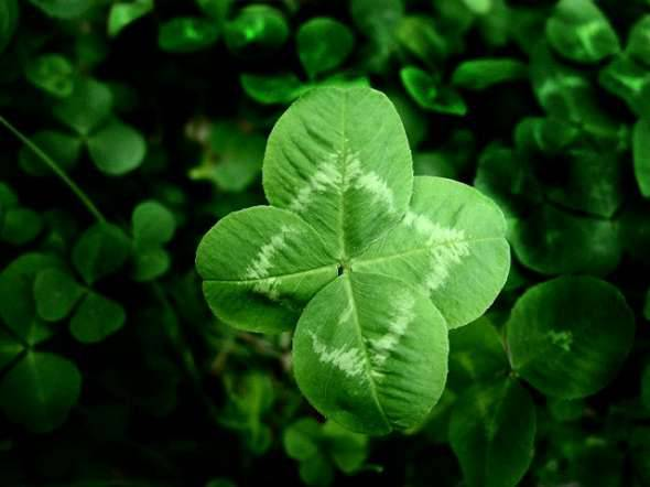 Luck O' The Four Leaf Clover