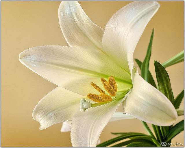 6 Popular Flowers for Easter