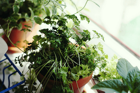 Eat Healthy All Winter Long With Your Own Indoor Garden
