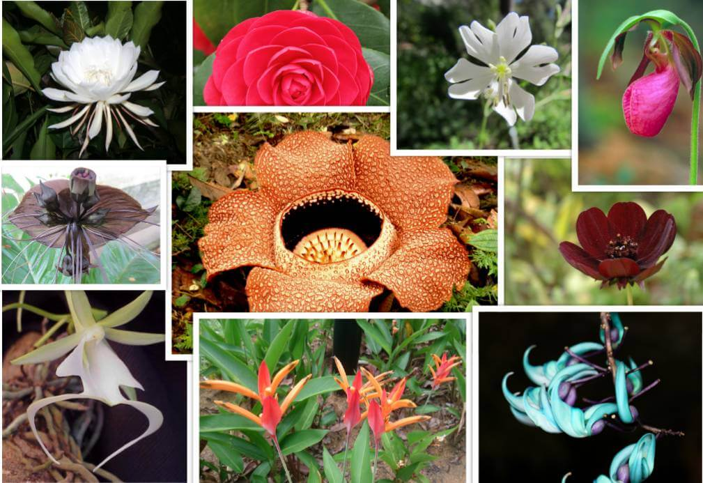 Endangered Flowers That Will Leave The World A Little Less Beautiful