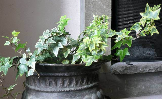 9 Houseplants That Will Purify Your Home's Air