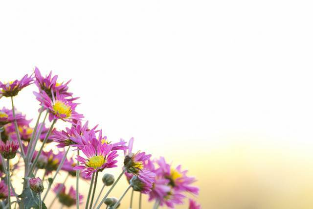 Florist's Mum