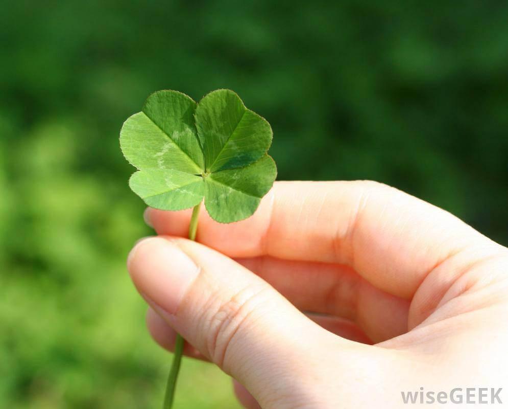 Luck O The Four Leaf Clover Avas Flowers