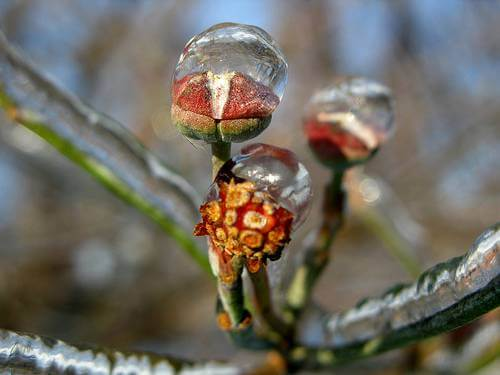 Frozen Water on Flower