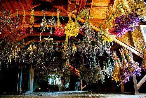 DIY Flower Drying: Enjoy, Fresh Flowers a Second Time by Drying