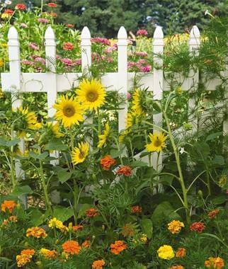It's Not Too Late To Start A Summer Garden!