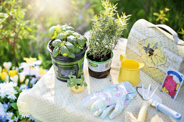 It's Not Too Late To Start A Summer Garden