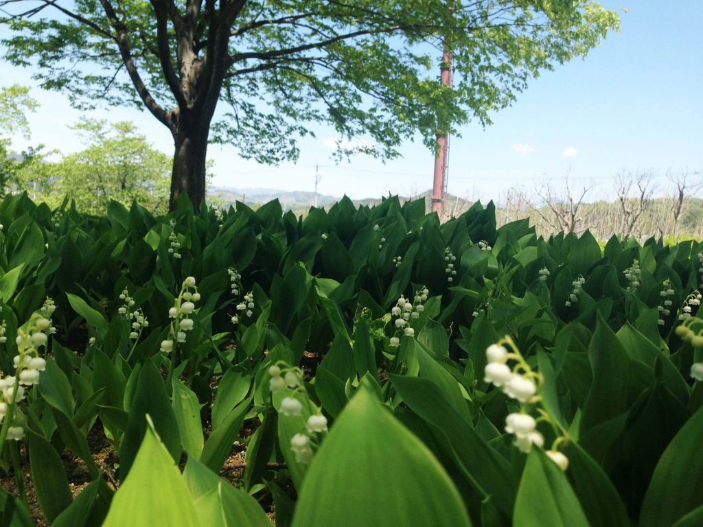 Lily Of The Valley, The Flower Of May