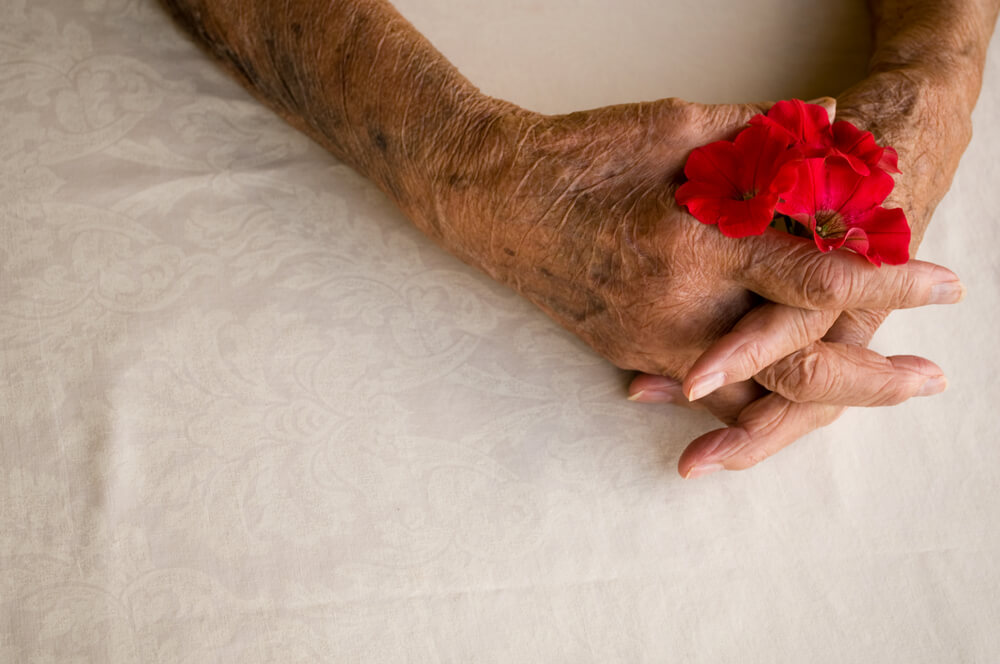 Elder hands holding a flower