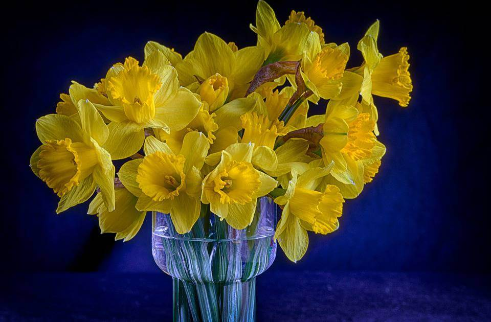 March's Birth Flower: The Dapper Daffodil