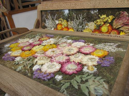 Pressed Flowers under Glass