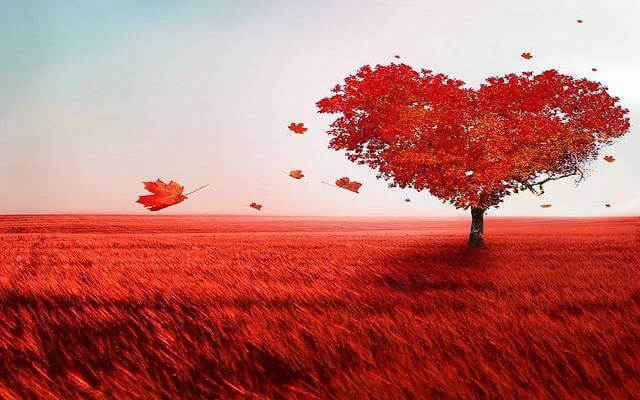 Red Romantic Field