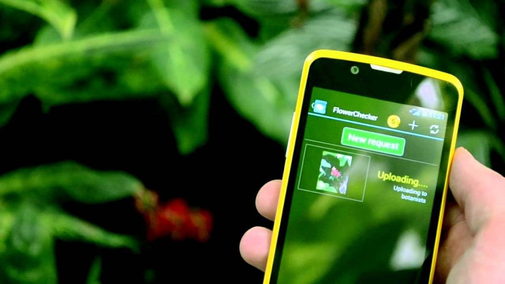 The Best Apps For Identifying Plants And Flowers