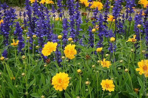 Repelent flowers