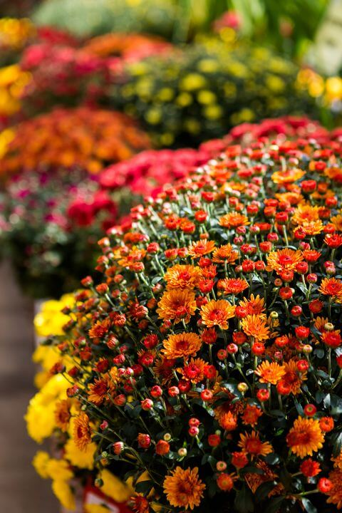 Which flowers are in bloom in Autumn?