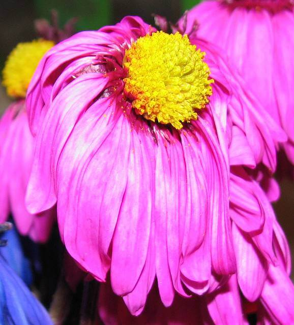 Keeping Your Flowers from Wilting In the Summer Heat - Avas Flowers