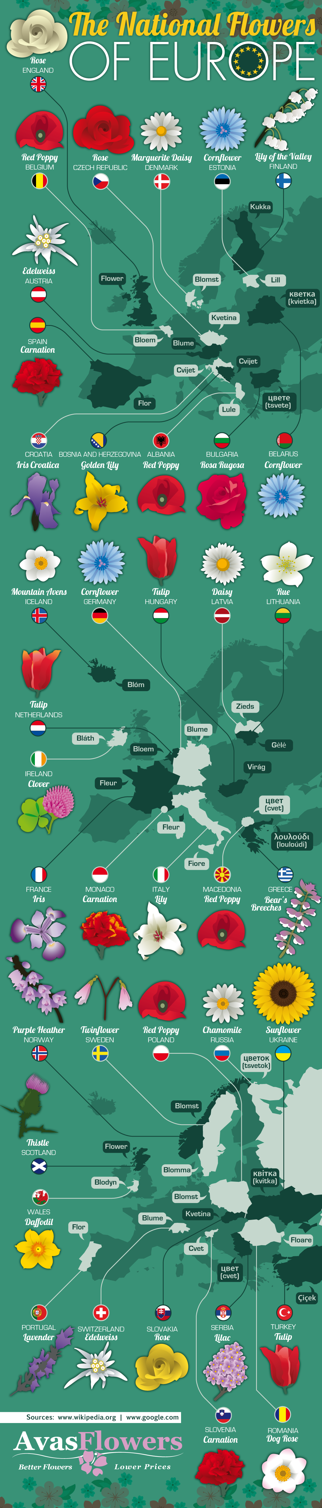 The National Flowers of Europe - Avasflowers.net - Infographic