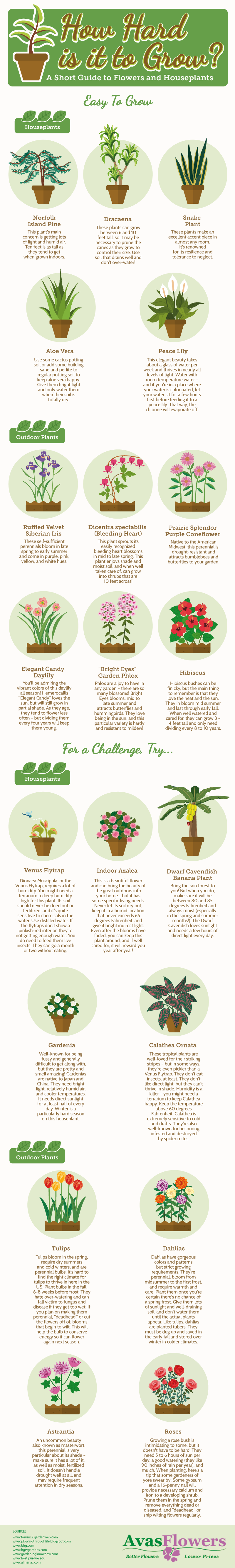 How Hard is it to Grow? - Avasflowers.net - Infographic