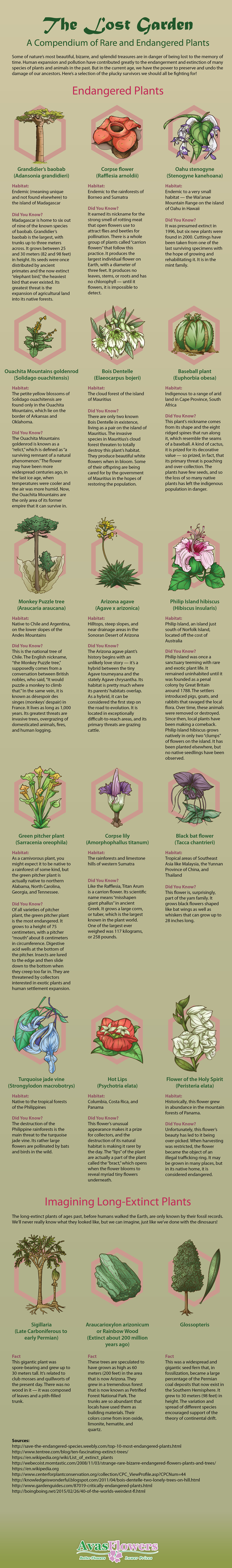 Lost Garden: A Compendium of Rare and Endangered Plants - Avasflowers.net - Infographic