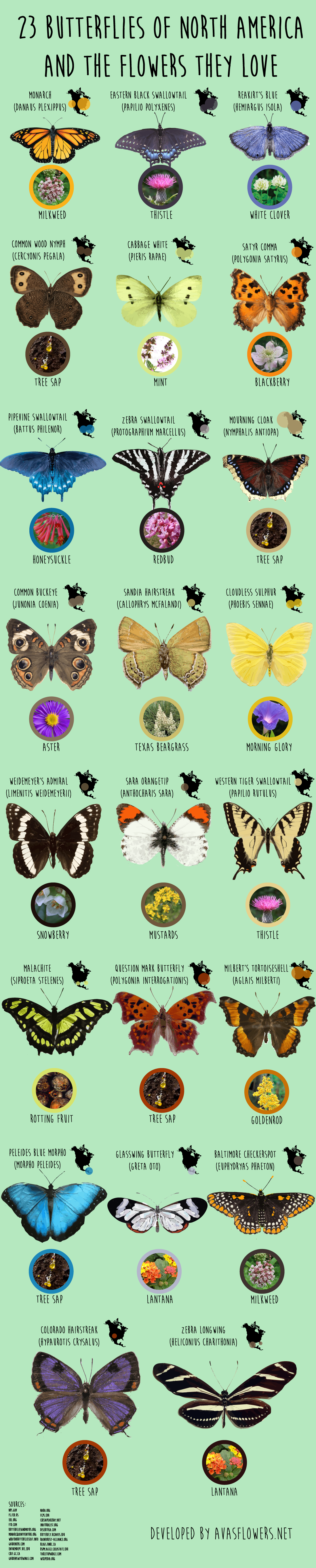 23 Butterflies of North America And the Flowers They Love - Avasflowers.net - Infographic