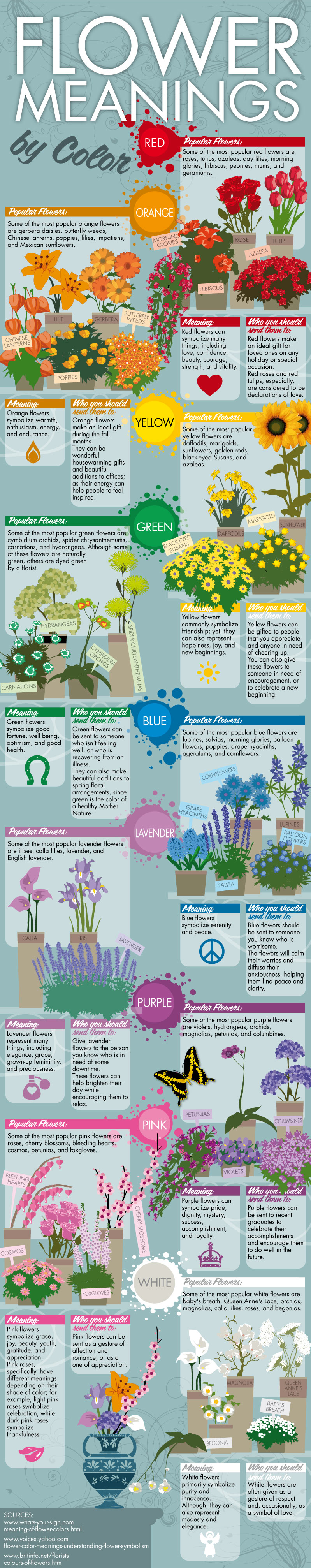 Infographic - Flower Meanings By Color