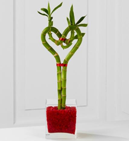Be Still My Heart Valentine Bamboo