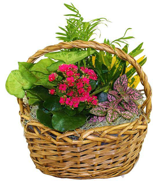 Blooming Garden Basket Avas Flowers