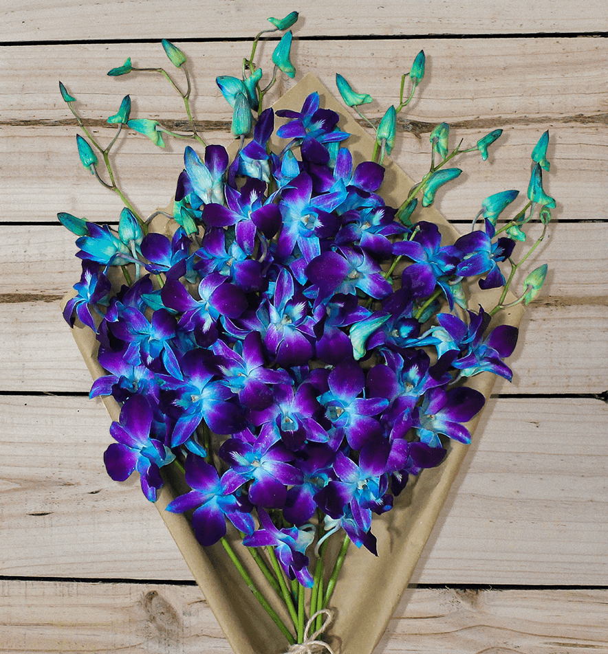 Blue Orchids - Farm Fresh