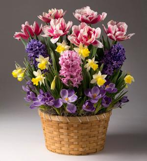 Bright Blooms Bulb Garden