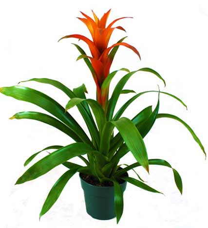 Bromeliad Planter - Farm Fresh