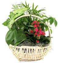 Classic Dish Garden Basket