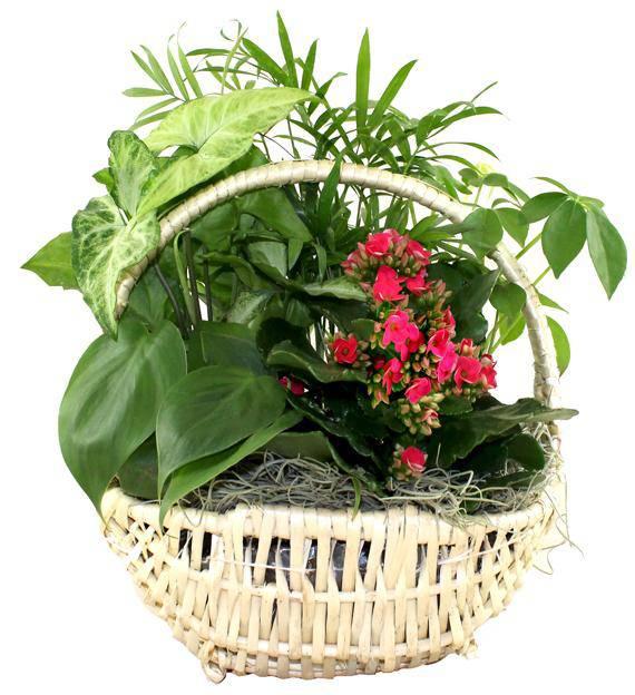Classic Dish Garden Basket Avas Flowers