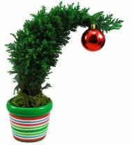 Grinchmas Cypress Tree - Farm Fresh