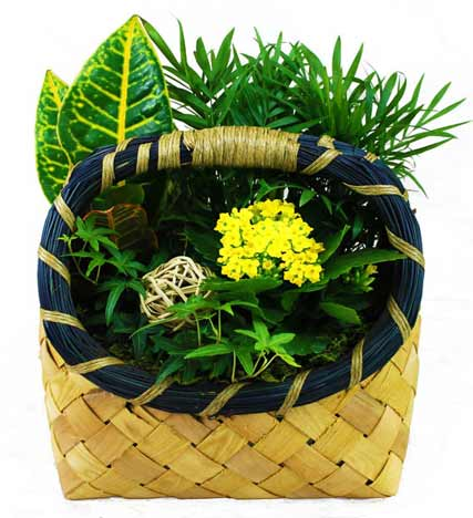 Designer's Choice Green Planter