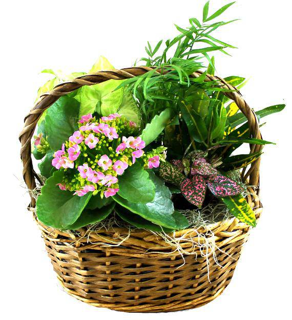 Dish Garden with Fresh Flowers Avas Flowers