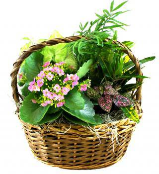 Dish Garden with Fresh Flowers - Farm Fresh