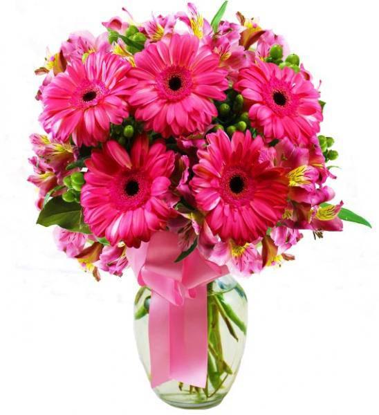 Flowers: Pink Gerbera Daisy Bouquet - Premium